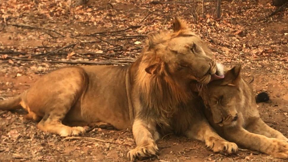 Liczba dzikich zwierząt i liczba ich gatunków spadają. Naukowcy mówią już o masowym wymieraniu