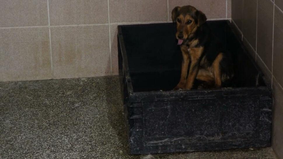 Interwencja w schronisku dla psów. Na miejscu prokuratorzy, policjanci i wolontariusze