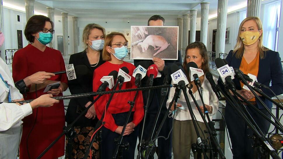 Eksperymenty na zwierzętach poza kontrolą organizacji pozarządowych? Kontrowersyjny projekt rządu
