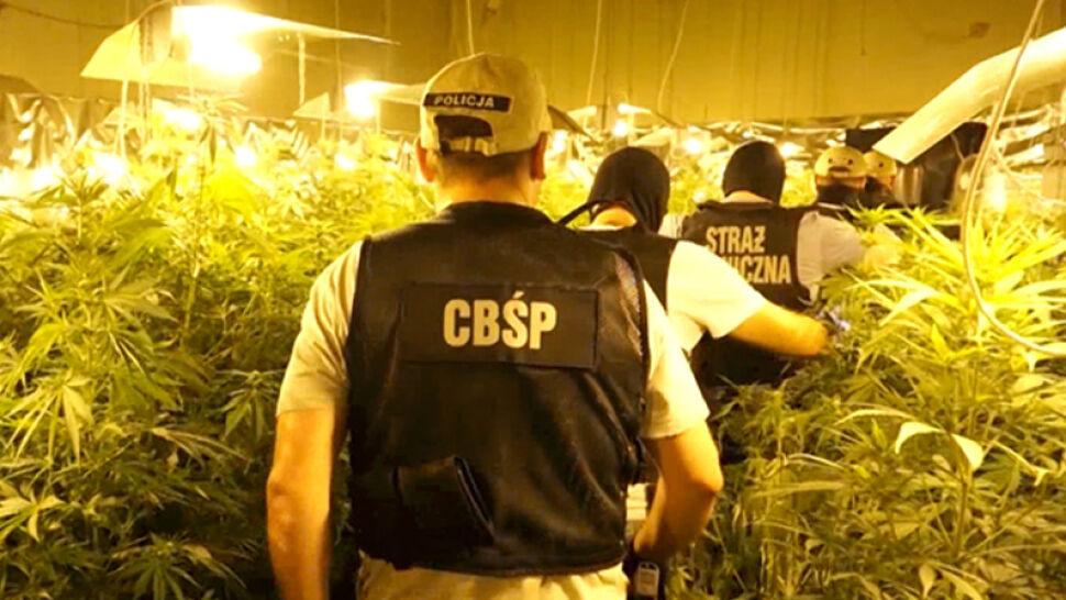 Budynek zmieniony w plantację marihuany. Akcja Straży Granicznej i CBŚP