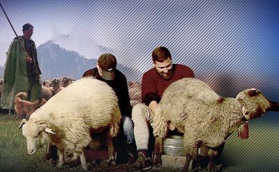 18.10.2017 | Filozof z korporacji wybrał owce. Teraz zdaje egzamin na juhasa