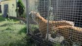 29.06.2017   Egzotyczne zwierzęta trzymane w skandalicznych warunkach. Nielegalne zoo zlikwidowane