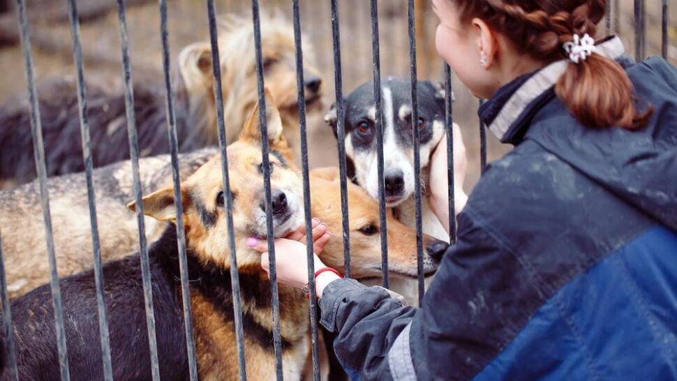 Duże zainteresowanie adopcją zwierząt ze schronisk
