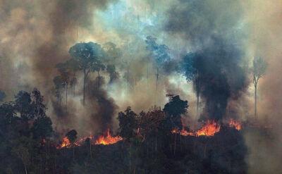 Żołnierze wkraczają do akcji, papież się modli. Pożary w Amazonii wciąż szaleją