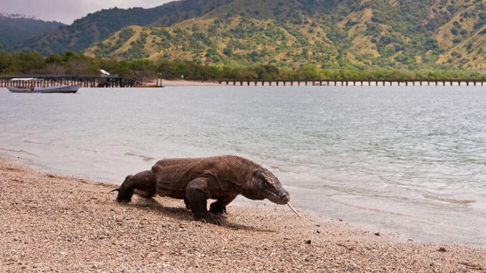 Komodo zamknięta nie tylko dla turystów. Wyspę mają opuścić także mieszkańcy
