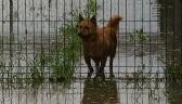 Schronisko koło Mielca zostało zalane. Pracownicy ewakuowali zwierzęta