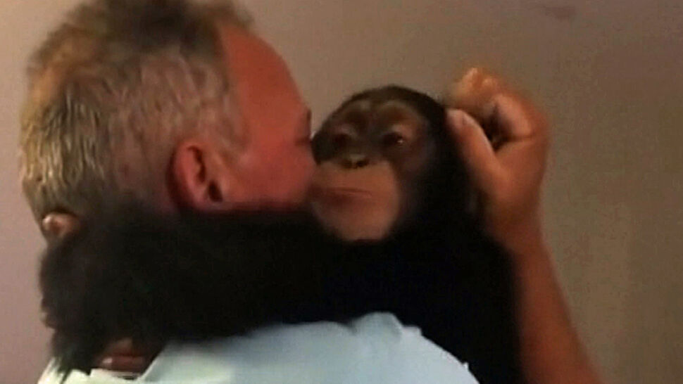 Wzruszające spotkanie szympansa i jego opiekunów