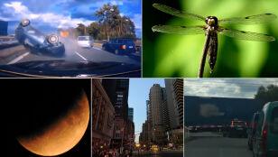 Blackout, wizyta w świecie owadów, zaćmienie?