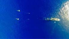Czyszczenie Pacyfiku ze śmieci (The Ocean Cleanup)