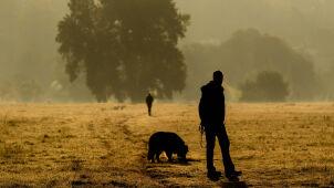 Prognoza pogody na jutro: w nocy mgły, w dzień do 24 stopni
