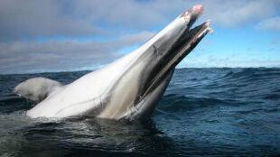 Odra zabójcza dla delfinów