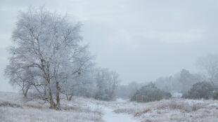 Prognoza pogody na dziś: lokalnie poprószy śnieg