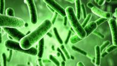 Bakteria jest istotą społeczną