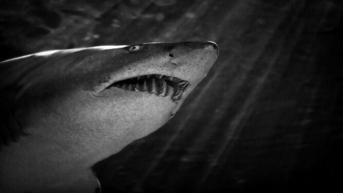 Mechaniczny patrol. Przed rekinami będą chroniły drony