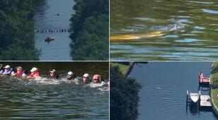 Delfiny wraz z młodymi utknęły w kanale. Pomogli ludzie